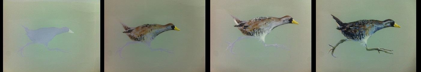 birdprogress