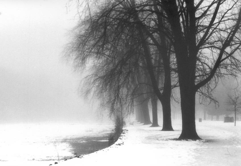 KIAM winter trees