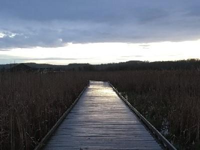 Wye Marsh web